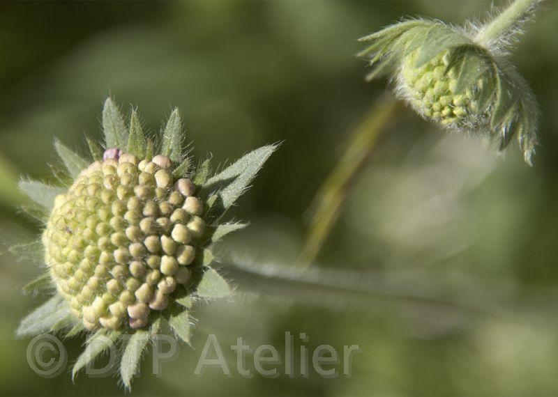 Postkarten mit Pflanzenmotiven